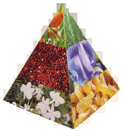 Pyramide olfactive des parfums expliquée en image